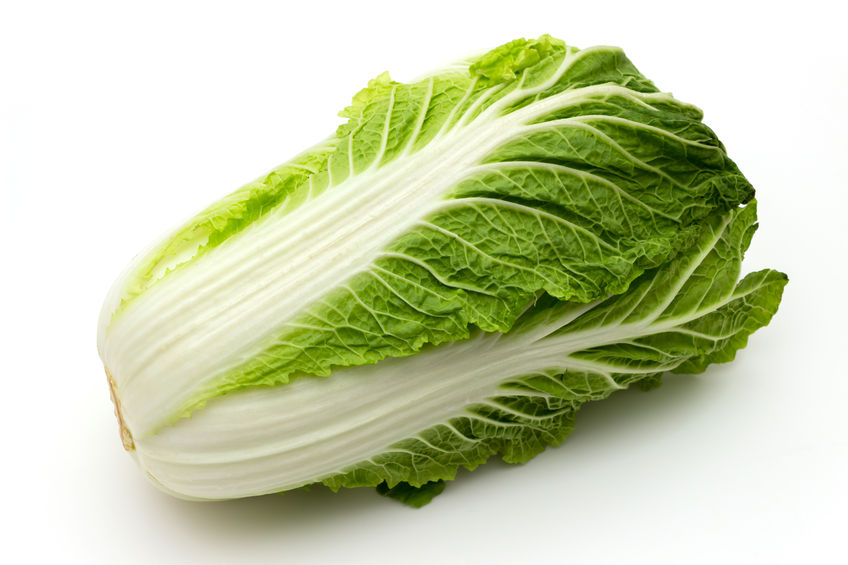 69442495 - chinese cabbage isolated on a white background