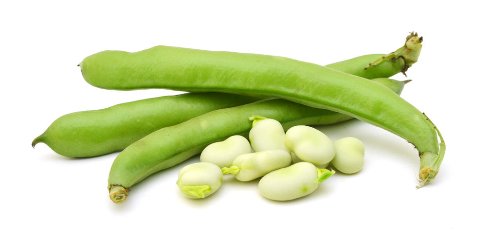 96909332 - broad beans